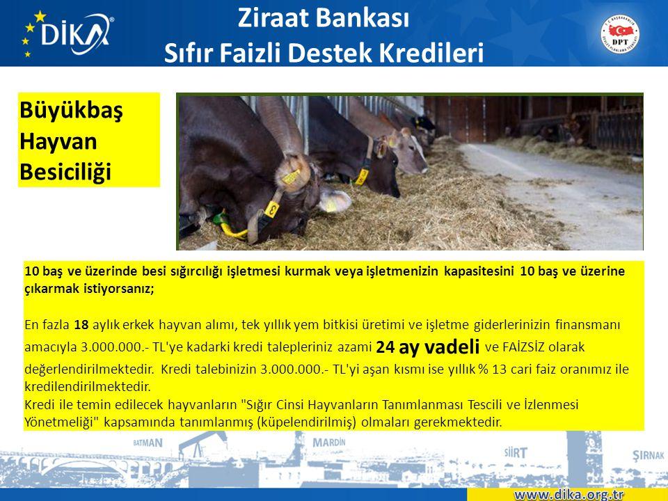 Ziraat Bankası Sıfır Faizli Destek Kredileri Büyükbaş Hayvan Besiciliği 10 baş ve üzerinde besi sığırcılığı işletmesi kurmak veya işletmenizin kapasit