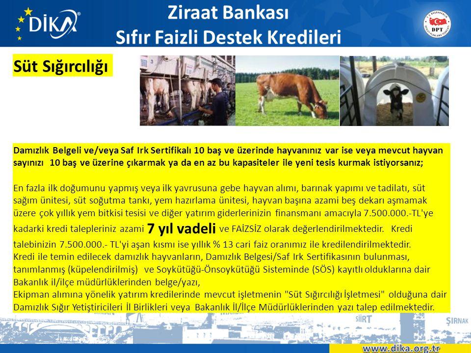 Ziraat Bankası Sıfır Faizli Destek Kredileri Süt Sığırcılığı Damızlık Belgeli ve/veya Saf Irk Sertifikalı 10 baş ve üzerinde hayvanınız var ise veya m
