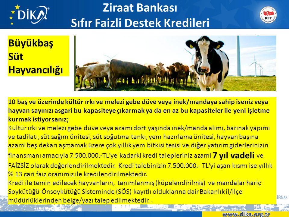 Ziraat Bankası Sıfır Faizli Destek Kredileri Büyükbaş Süt Hayvancılığı 10 baş ve üzerinde kültür ırkı ve melezi gebe düve veya inek/mandaya sahip isen
