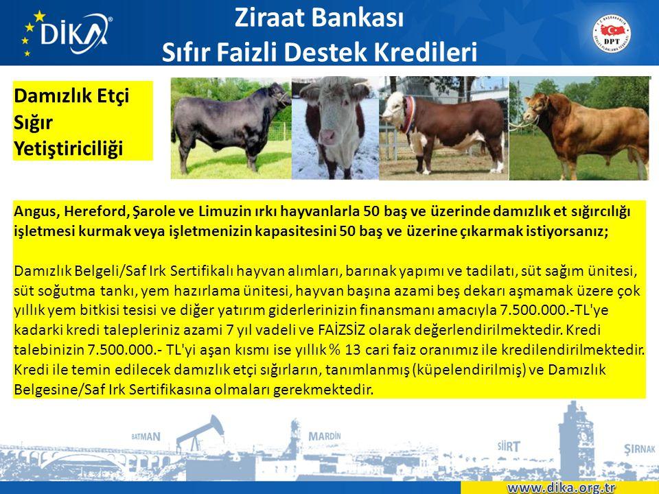 Ziraat Bankası Sıfır Faizli Destek Kredileri Damızlık Etçi Sığır Yetiştiriciliği Angus, Hereford, Şarole ve Limuzin ırkı hayvanlarla 50 baş ve üzerind
