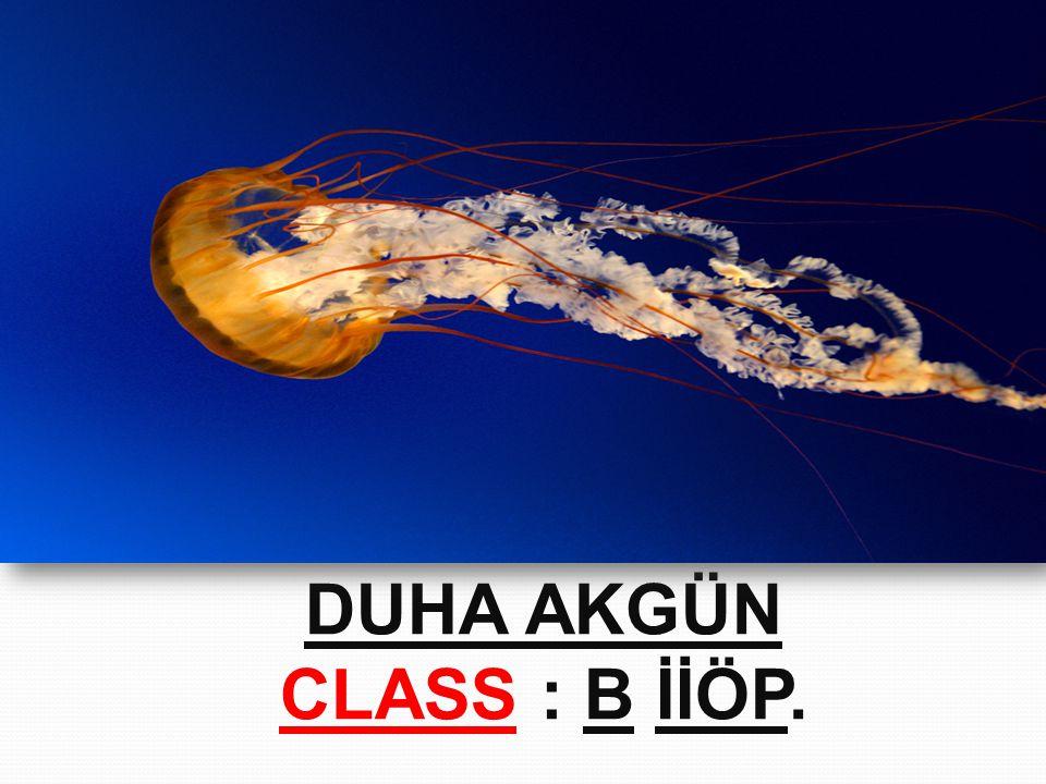DUHA AKGÜN CLASS : B İİÖP.