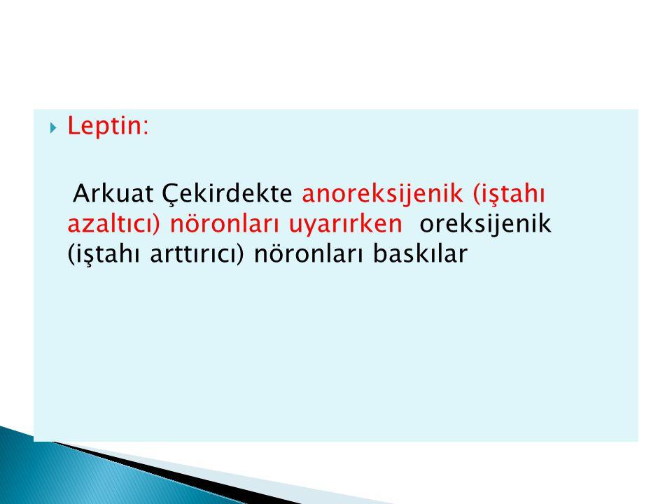  Leptin: Arkuat Çekirdekte anoreksijenik (iştahı azaltıcı) nöronları uyarırken oreksijenik (iştahı arttırıcı) nöronları baskılar