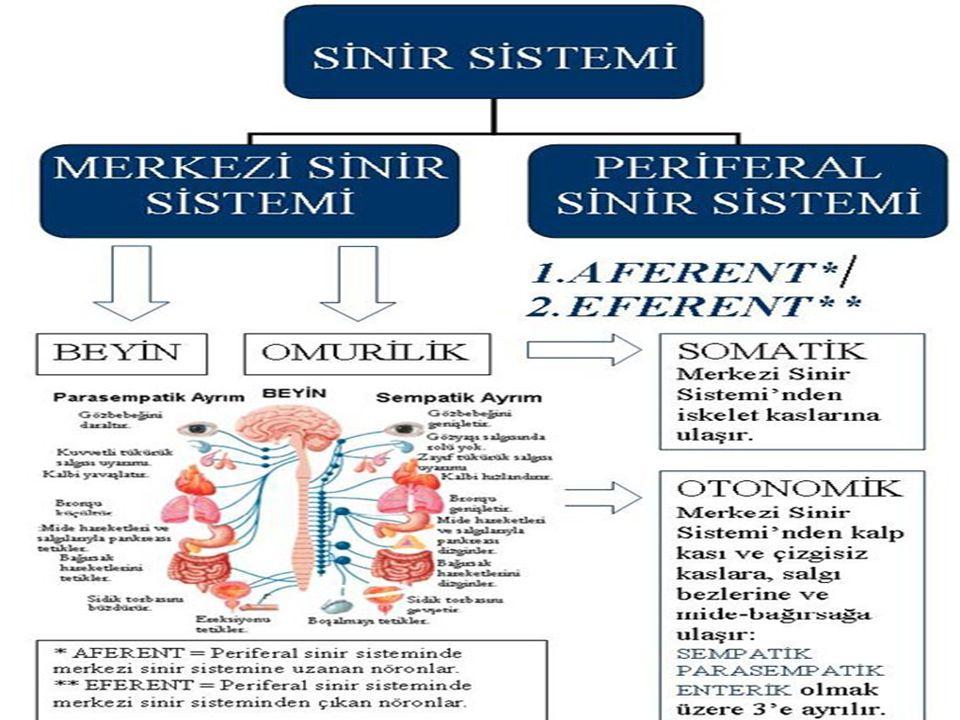0 Çok hücreli, gelişmiş yapılı canlıların (insanlar, omurgalı ve bazı omurgasız hayvanlar) vücudu özel görevler yapan organ ve sistemlerden oluşur.