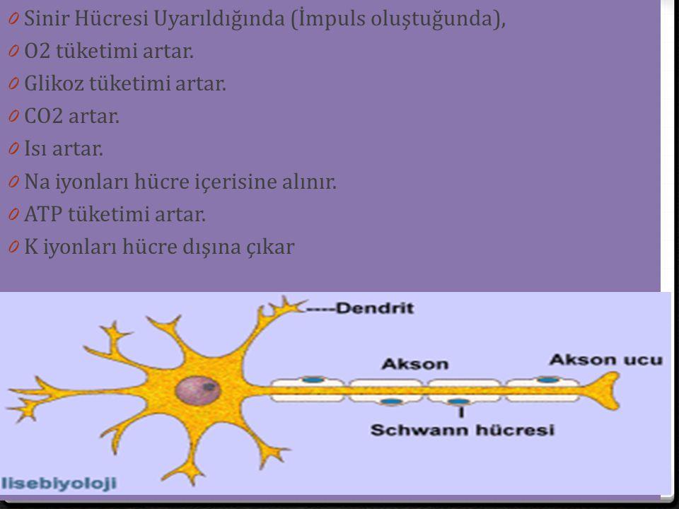 0 Sinir Hücresi Uyarıldığında (İmpuls oluştuğunda), 0 O2 tüketimi artar. 0 Glikoz tüketimi artar. 0 CO2 artar. 0 Isı artar. 0 Na iyonları hücre içeris