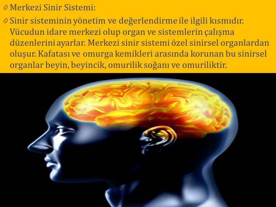 0 Merkezi Sinir Sistemi: 0 Sinir sisteminin yönetim ve değerlendirme ile ilgili kısmıdır. Vücudun idare merkezi olup organ ve sistemlerin çalışma düze