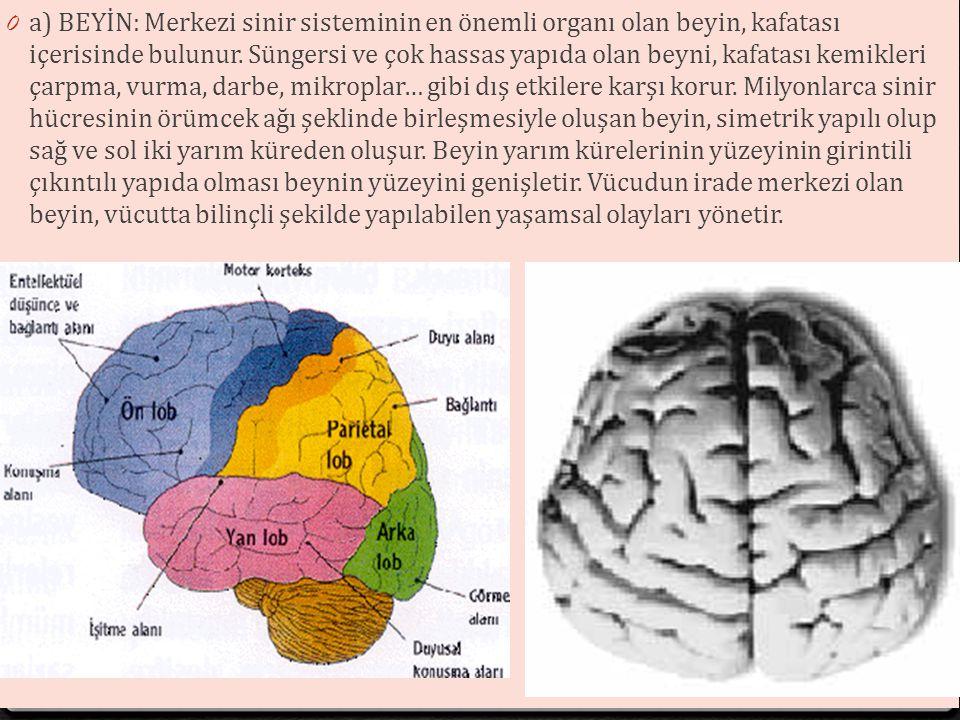 Çevresel Sinir Sistemi: 0 Lifsi yapıdaki sinir tellerinden (hücrelerinden) oluşur.
