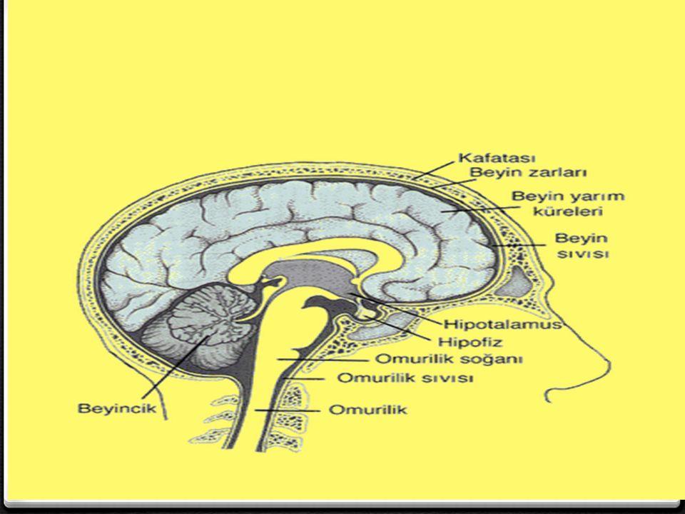 0 Beynin görevleri arasında; 0 Duyu organlarından gelen bilgilerin değerlendirilmesi, 0 İskelet (kol-bacak) kaslarının çalıştırılması, 0 Öğrenme, düşünme, hafıza, hayal kurma, 0 Bilgi üretme, problem çözme, konuşma… bulunur.