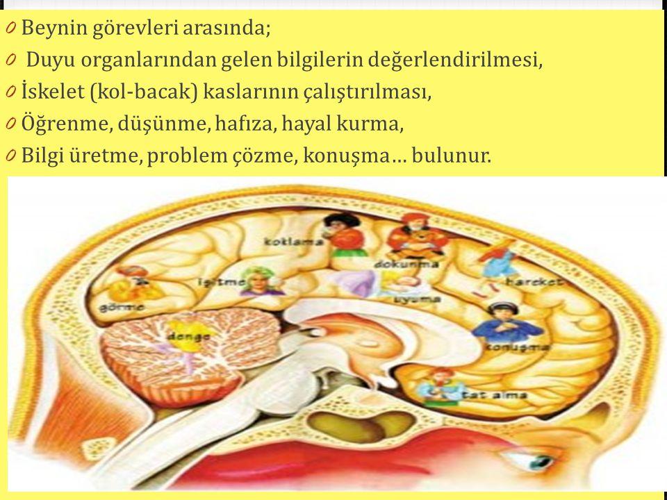 0 Beynin görevleri arasında; 0 Duyu organlarından gelen bilgilerin değerlendirilmesi, 0 İskelet (kol-bacak) kaslarının çalıştırılması, 0 Öğrenme, düşü