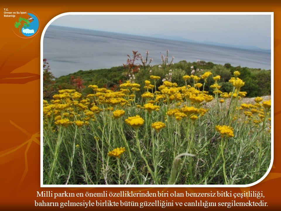 Milli parkın en önemli özelliklerinden biri olan benzersiz bitki çeşitliliği, baharın gelmesiyle birlikte bütün güzelliğini ve canlılığını sergilemekt