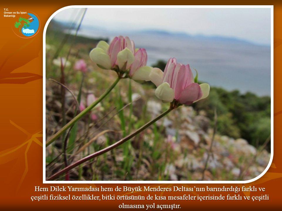 Hem Dilek Yarımadası hem de Büyük Menderes Deltası'nın barındırdığı farklı ve çeşitli fiziksel özellikler, bitki örtüsünün de kısa mesafeler içerisind