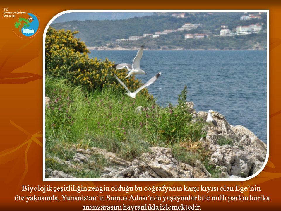 Biyolojik çeşitliliğin zengin olduğu bu coğrafyanın karşı kıyısı olan Ege'nin öte yakasında, Yunanistan'ın Samos Adası'nda yaşayanlar bile milli parkı