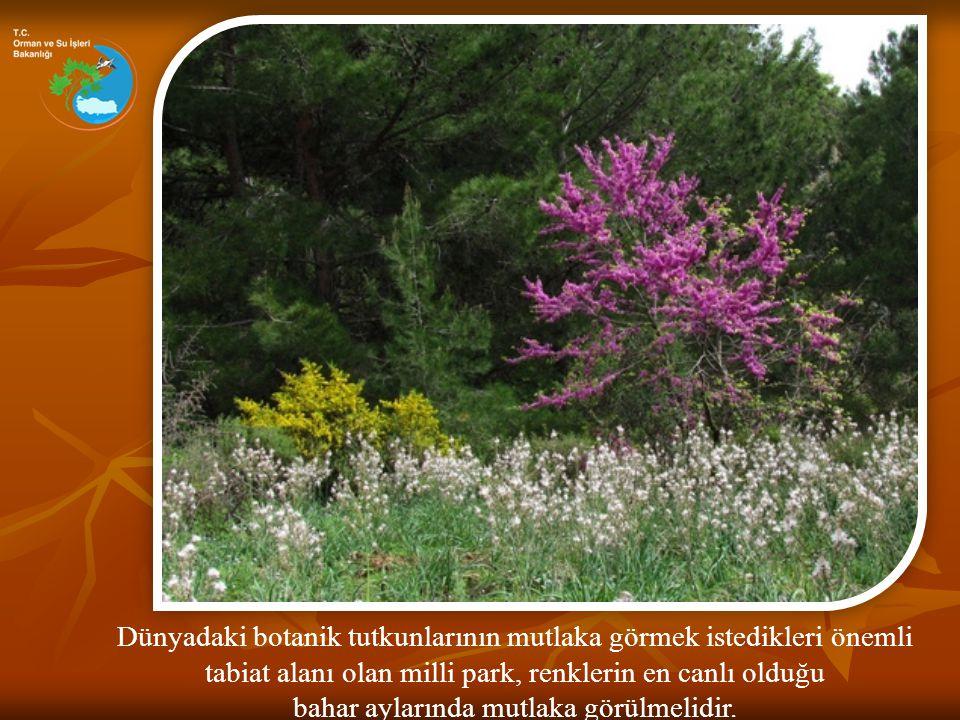 Dünyadaki botanik tutkunlarının mutlaka görmek istedikleri önemli tabiat alanı olan milli park, renklerin en canlı olduğu bahar aylarında mutlaka görü