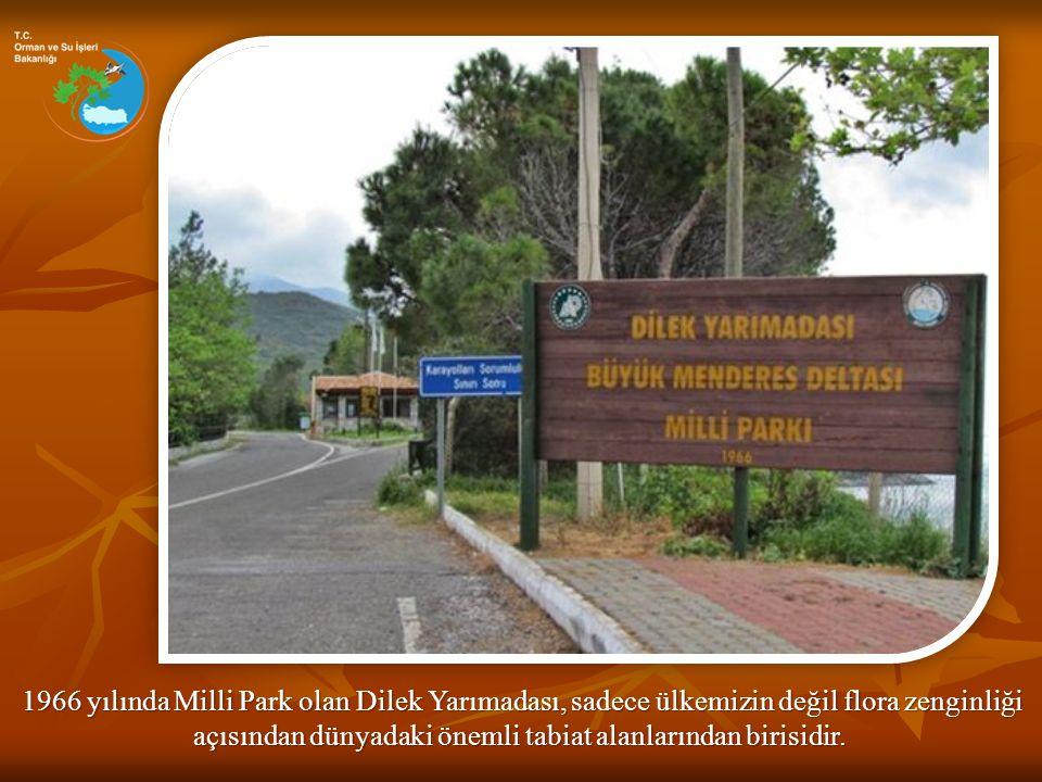 1966 yılında Milli Park olan Dilek Yarımadası, sadece ülkemizin değil flora zenginliği 1966 yılında Milli Park olan Dilek Yarımadası, sadece ülkemizin