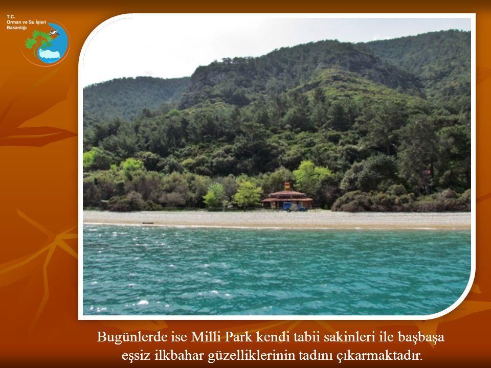 Dilek Yarımadası yılın 12 ayında da farklı güzelliklerle dolu harika bir tabiat alanıdır.