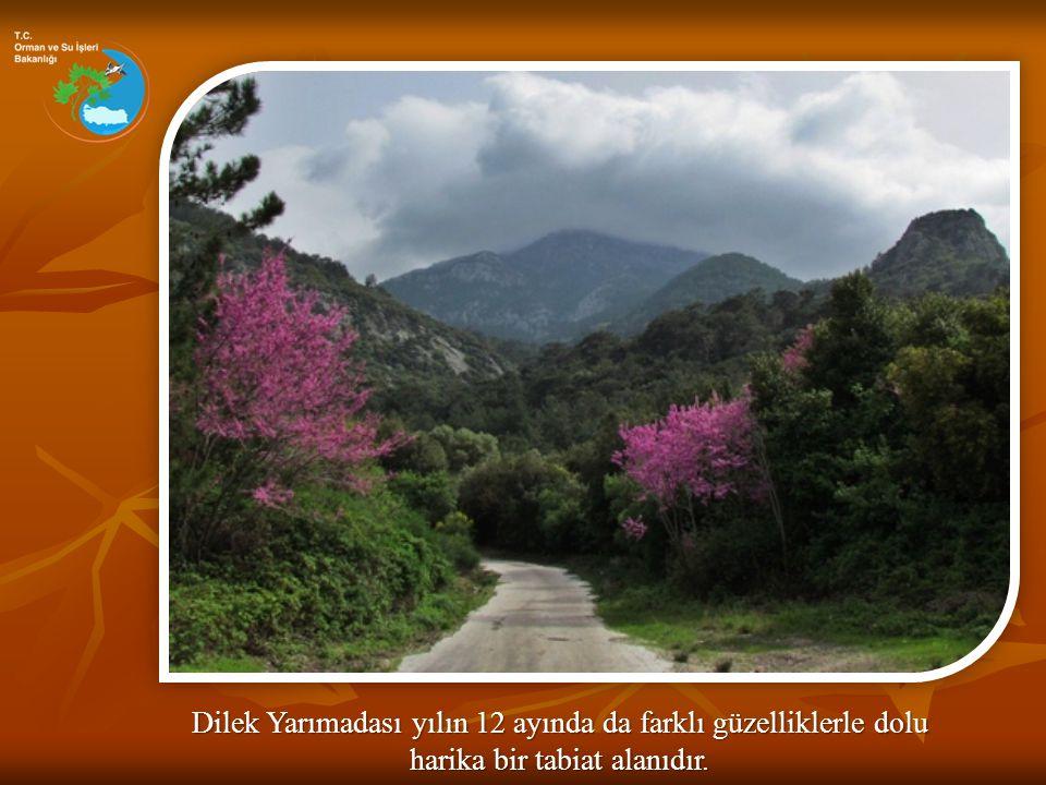 Ancak milli parkın en güzel zamanı tabiatın canlandığı bahar aylarıdır.
