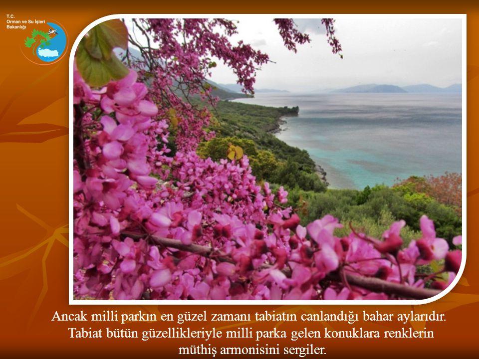 Akdeniz'den Kafkasya'ya kadar kıyılarda yayılım gösteren neredeyse bütün bitkilerin tabii olarak bir arada görüldüğü bir tabiat hazinesidir Dilek Yarımadası.