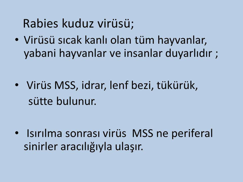Rabies kuduz virüsü; • Virüsü sıcak kanlı olan tüm hayvanlar, yabani hayvanlar ve insanlar duyarlıdır ; • Virüs MSS, idrar, lenf bezi, tükürük, sütte