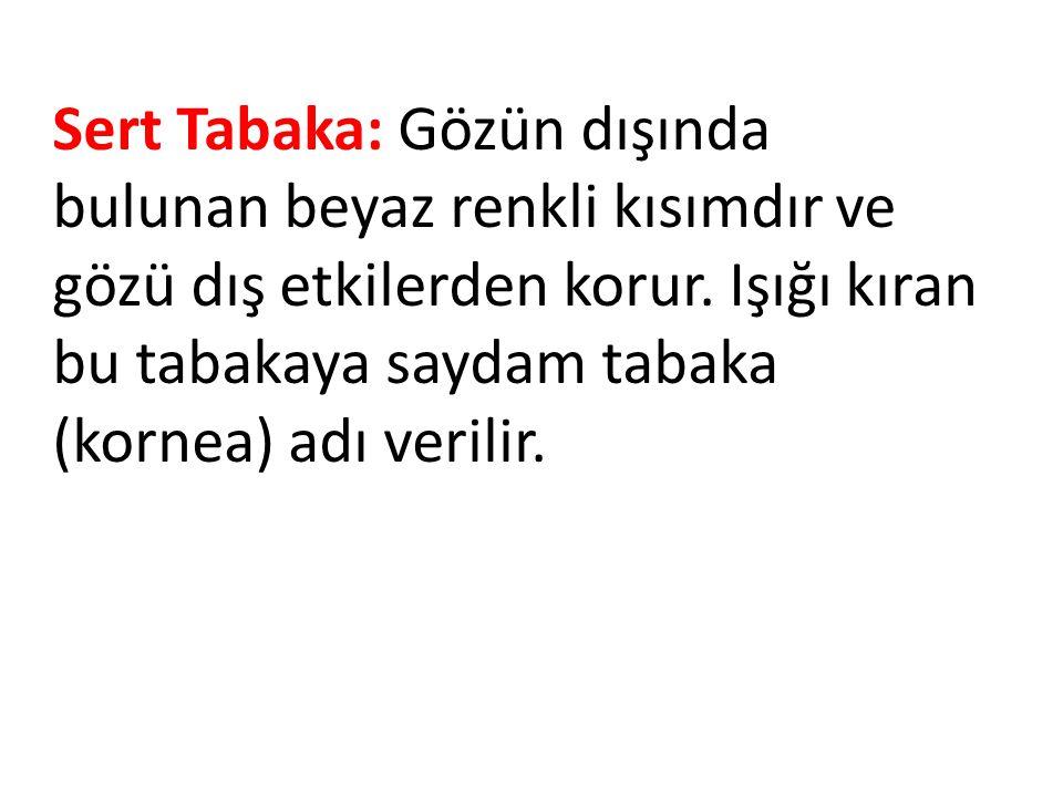 Sert Tabaka: Gözün dışında bulunan beyaz renkli kısımdır ve gözü dış etkilerden korur. Işığı kıran bu tabakaya saydam tabaka (kornea) adı verilir.