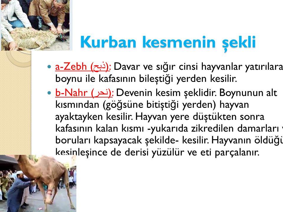 Kurban kesmenin şekli  a-Zebh ( ذبح ): Davar ve sı ğ ır cinsi hayvanlar yatırılarak, boynu ile kafasının bileşti ğ i yerden kesilir.  b-Nahr ( نحر )