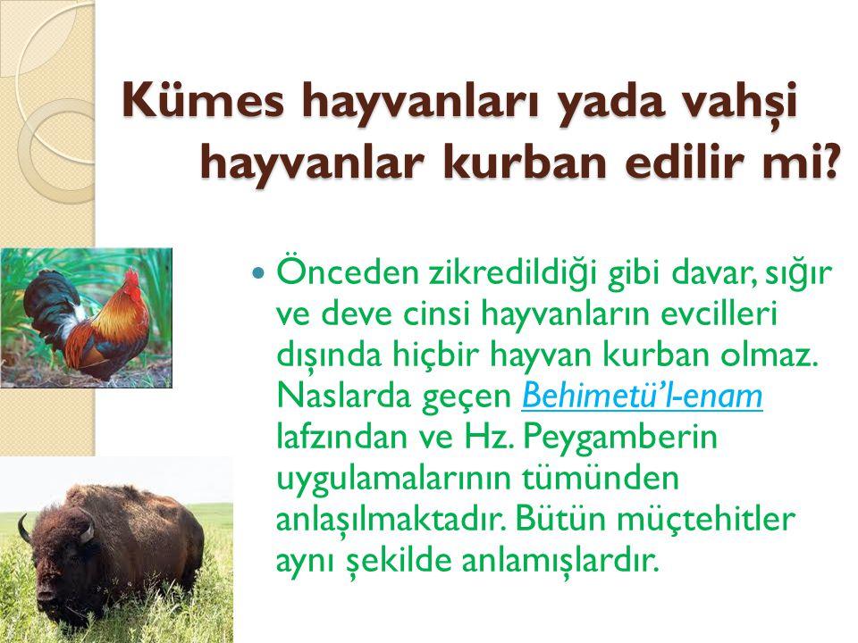 Kümes hayvanları yada vahşi hayvanlar kurban edilir mi.