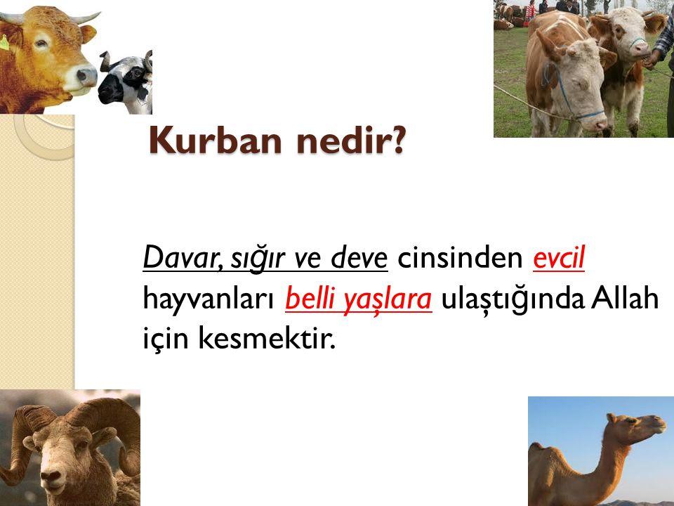 Kurban nedir? Davar, sı ğ ır ve deve cinsinden evcil hayvanları belli yaşlara ulaştı ğ ında Allah için kesmektir.