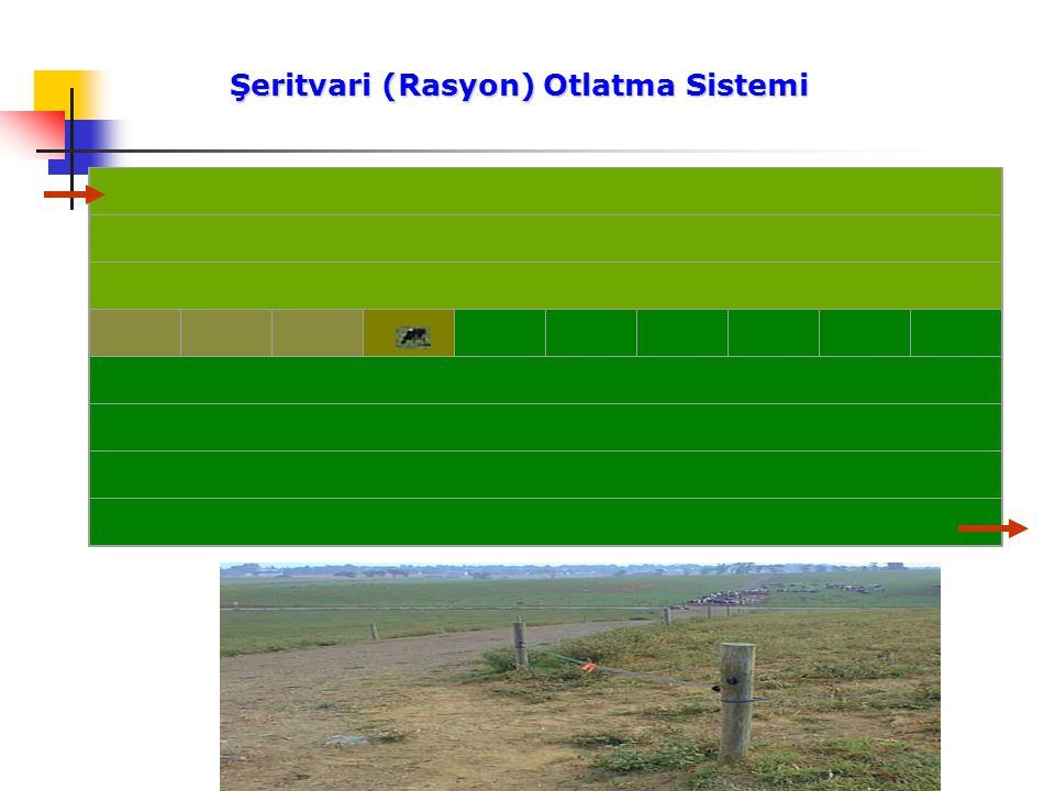 Şeritvari (Rasyon) Otlatma Sistemi Şeritvari (Rasyon) Otlatma Sistemi GGür gelişen, verimi yüksek, sulanan ve gübrelenen mer'alar için uygulanır. Ç