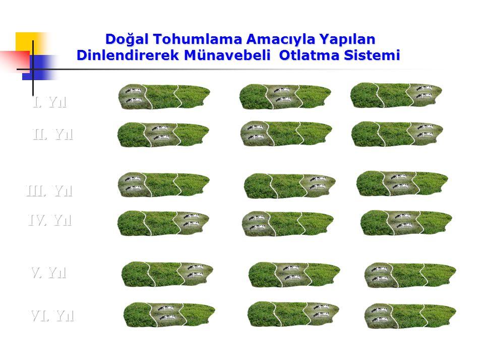 Doğal Tohumlama Amacıyla Yapılan Dinlendirerek Münavebeli Otlatma Sistemi Doğal Tohumlama Amacıyla Yapılan Dinlendirerek Münavebeli Otlatma Sistemi V