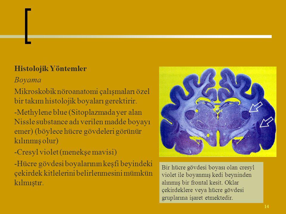 14 Histolojik Yöntemler Boyama Mikroskobik nöroanatomi çalışmaları özel bir takım histolojik boyaları gerektirir. -Methylene blue (Sitoplazmada yer al