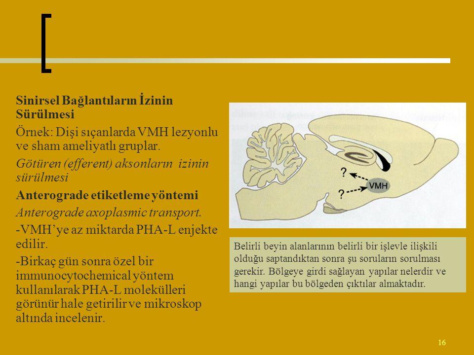 16 Sinirsel Bağlantıların İzinin Sürülmesi Örnek: Dişi sıçanlarda VMH lezyonlu ve sham ameliyatlı gruplar. Götüren (efferent) aksonların izinin sürülm