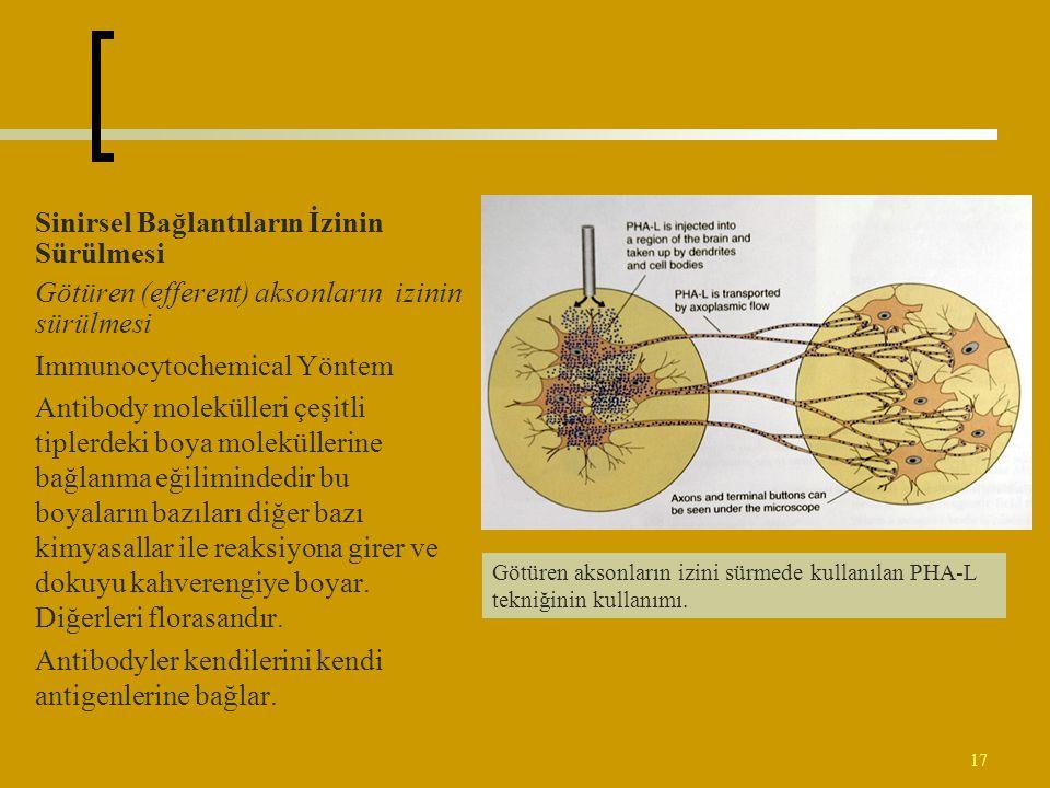 17 Sinirsel Bağlantıların İzinin Sürülmesi Götüren (efferent) aksonların izinin sürülmesi Immunocytochemical Yöntem Antibody molekülleri çeşitli tiple