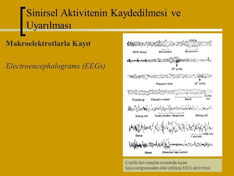 29 Makroelektrotlarla Kayıt Electroencephalograms (EEGs) Çeşitli davranışlar sırasında sıçan hipocampusunden elde edilmiş EEG aktivitesi. Sinirsel Akt