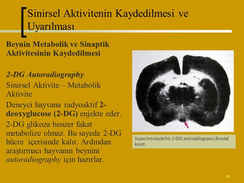 30 Beynin Metabolik ve Sinaptik Aktivitesinin Kaydedilmesi 2-DG Autoradiography Sinirsel Aktivite – Metabolik Aktivite Deneyci hayvana radyoaktif 2- d