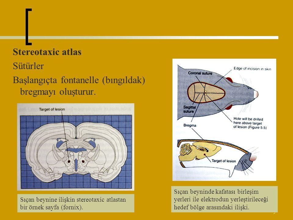 9 Stereotaxic atlas Sütürler Başlangıçta fontanelle (bıngıldak) bregmayı oluşturur. Sıçan beyninde kafatası birleşim yerleri ile elektrodun yerleştiri