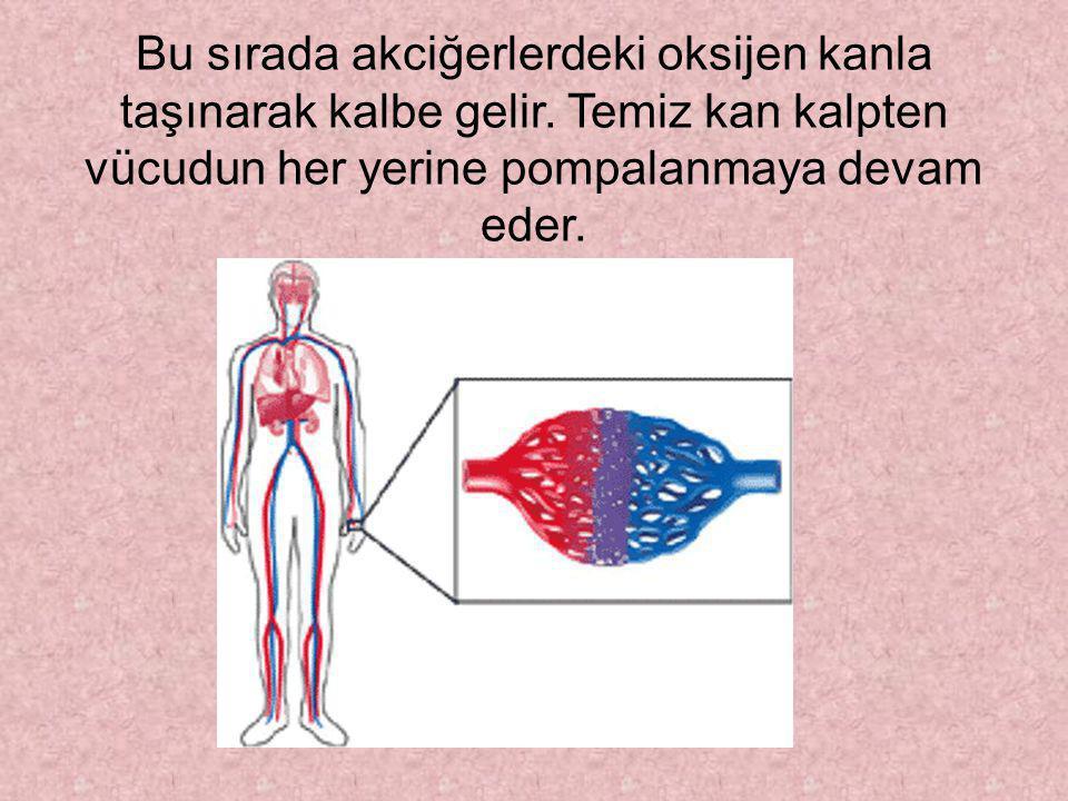 Damarlarımız kirli kanı kalbe iletir. Kalpte bu kanı akciğerlere göndererek içindeki karbondioksitin solunumla dışarı atılmasını sağlar.