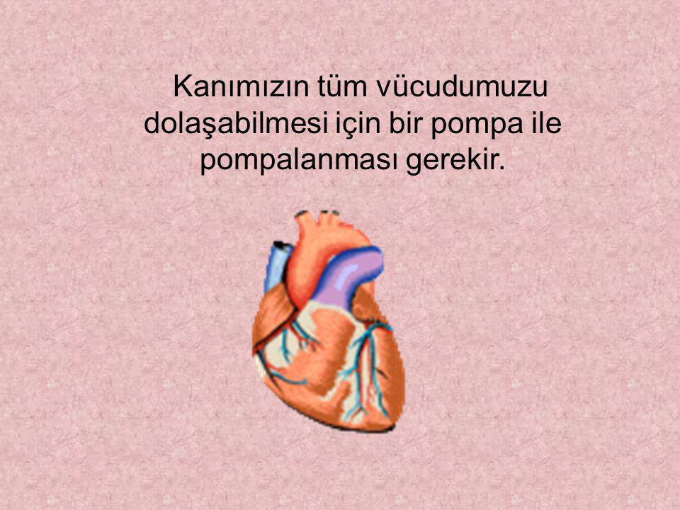 Yetişkin bir insanın damarları, ucuca eklendiğinde 100.000 km'lik bir hortum oluşur.