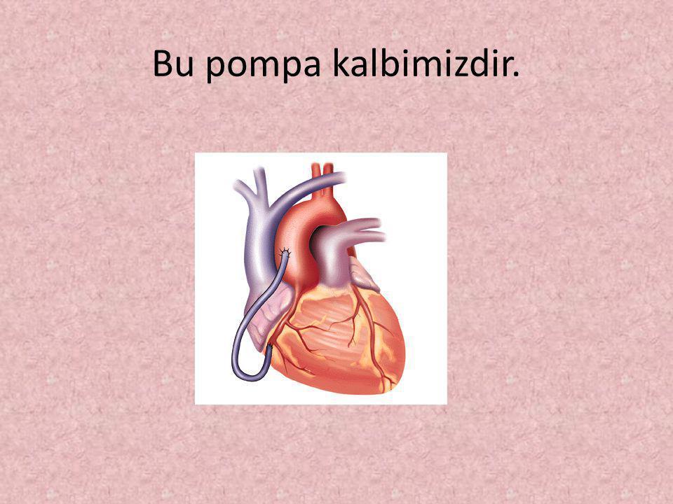 Kanımızın tüm vücudumuzu dolaşabilmesi için bir pompa ile pompalanması gerekir.