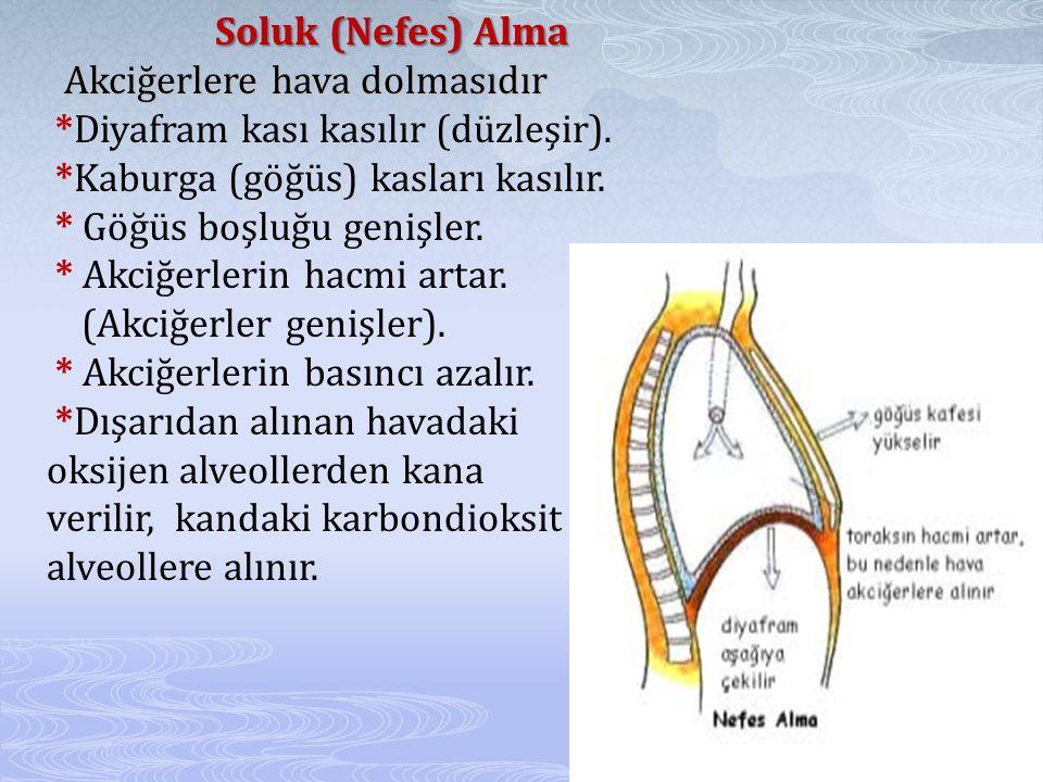 Soluk (Nefes) Alma Akciğerlere hava dolmasıdır Soluk (Nefes) Alma Akciğerlere hava dolmasıdır *Diyafram kası kasılır (düzleşir).