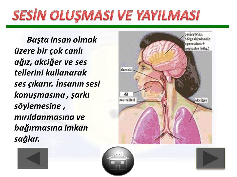 Başta insan olmak üzere bir çok canlı ağız, akciğer ve ses tellerini kullanarak ses çıkarır. İnsanın sesi konuşmasına, şarkı söylemesine, mırıldanması