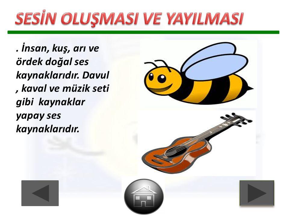 . İnsan, kuş, arı ve ördek doğal ses kaynaklarıdır. Davul, kaval ve müzik seti gibi kaynaklar yapay ses kaynaklarıdır.