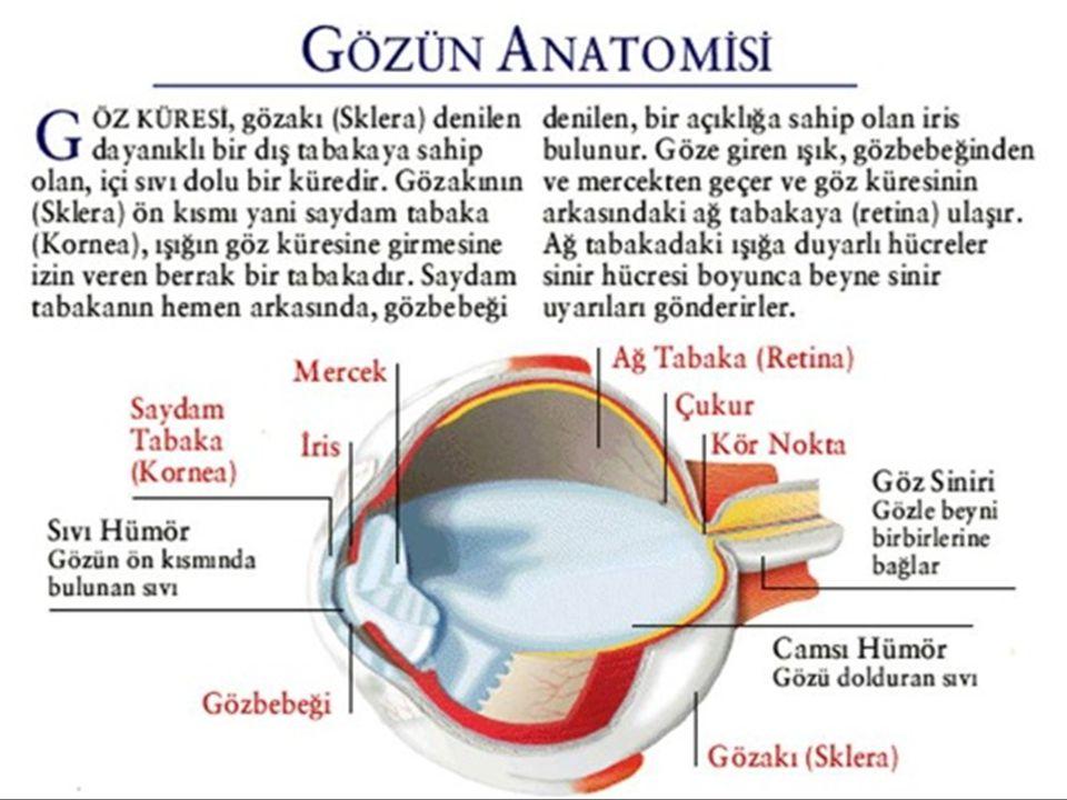  Saydam tabaka veya mercek yüzeyinin kavislenmesiyle oluşan göz kusurudur.