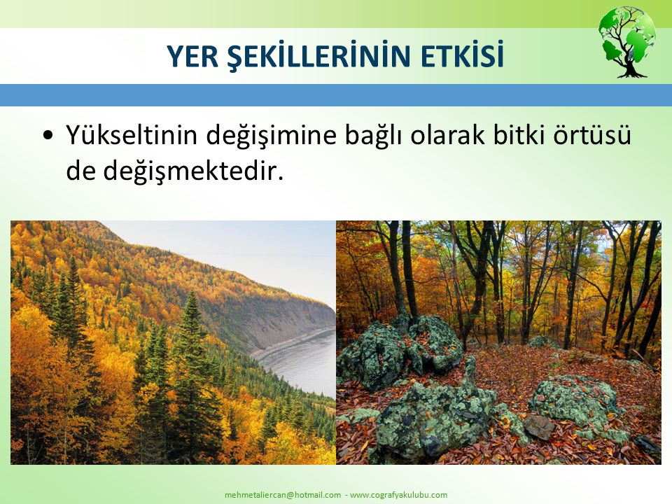 mehmetaliercan@hotmail.com - www.cografyakulubu.com YER ŞEKİLLERİNİN ETKİSİ •Yükseltinin değişimine bağlı olarak bitki örtüsü de değişmektedir.