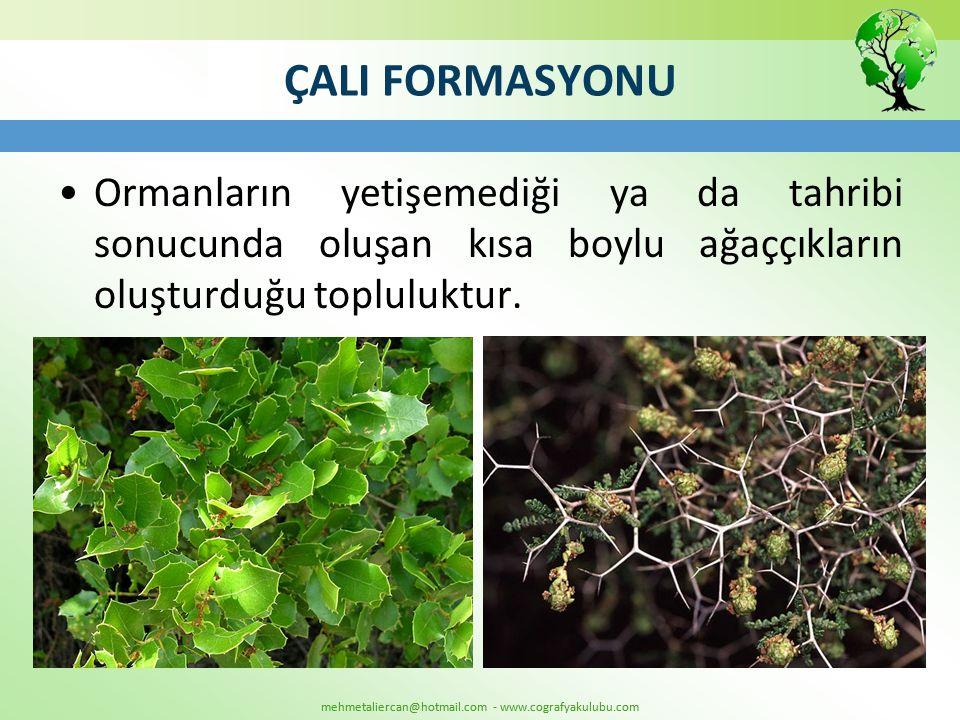 mehmetaliercan@hotmail.com - www.cografyakulubu.com ÇALI FORMASYONU •Ormanların yetişemediği ya da tahribi sonucunda oluşan kısa boylu ağaççıkların ol
