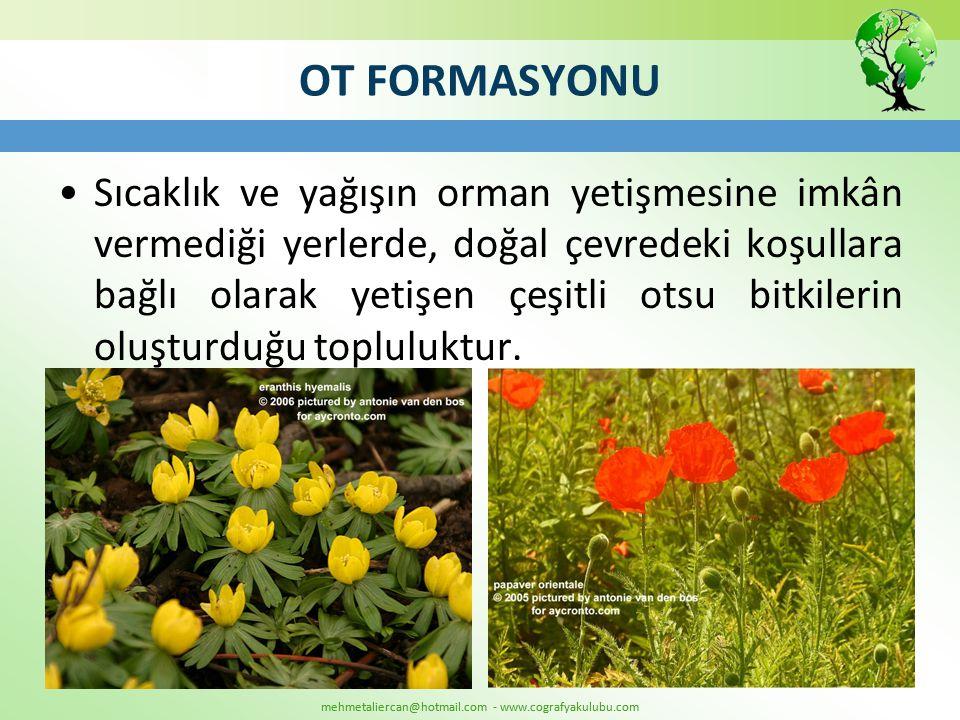 mehmetaliercan@hotmail.com - www.cografyakulubu.com OT FORMASYONU •Sıcaklık ve yağışın orman yetişmesine imkân vermediği yerlerde, doğal çevredeki koş