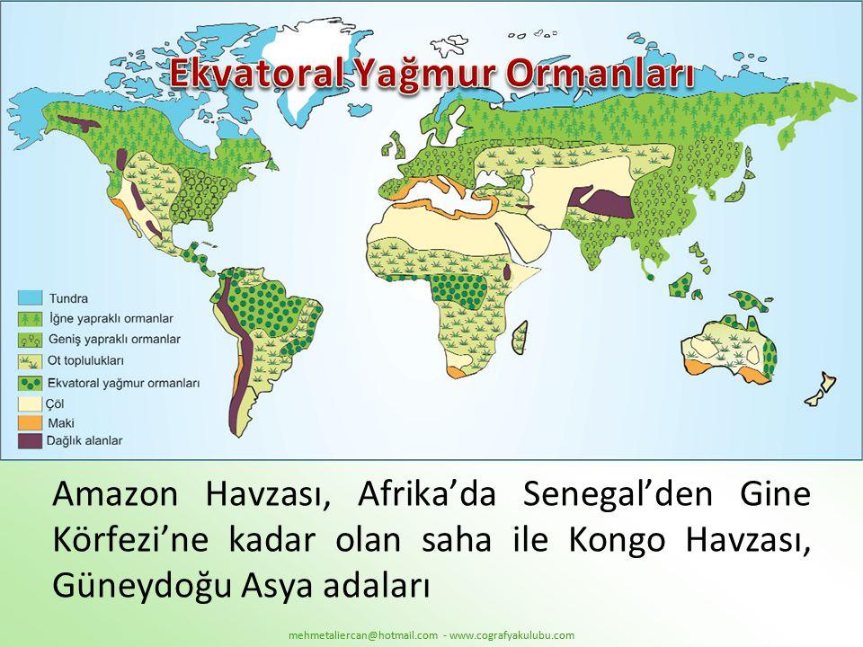 Amazon Havzası, Afrika'da Senegal'den Gine Körfezi'ne kadar olan saha ile Kongo Havzası, Güneydoğu Asya adaları