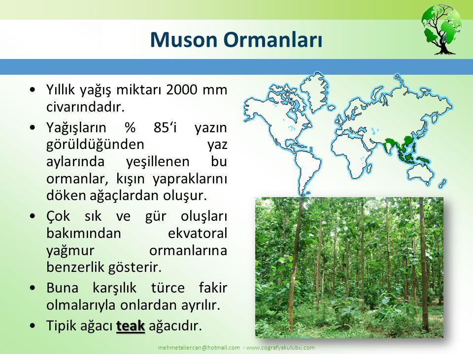 mehmetaliercan@hotmail.com - www.cografyakulubu.com Muson Ormanları •Yıllık yağış miktarı 2000 mm civarındadır. •Yağışların % 85'i yazın görüldüğünden