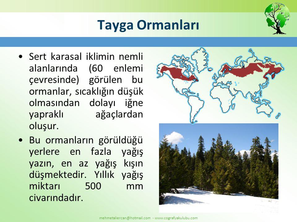 mehmetaliercan@hotmail.com - www.cografyakulubu.com Tayga Ormanları •Sert karasal iklimin nemli alanlarında (60 enlemi çevresinde) görülen bu ormanlar