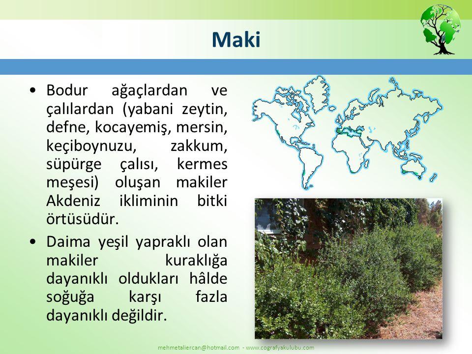 mehmetaliercan@hotmail.com - www.cografyakulubu.com Maki •Bodur ağaçlardan ve çalılardan (yabani zeytin, defne, kocayemiş, mersin, keçiboynuzu, zakkum