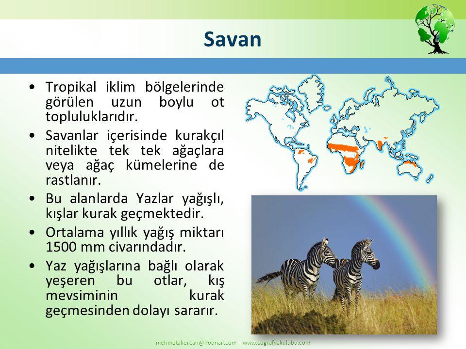 Savan •Tropikal iklim bölgelerinde görülen uzun boylu ot topluluklarıdır. •Savanlar içerisinde kurakçıl nitelikte tek tek ağaçlara veya ağaç kümelerin