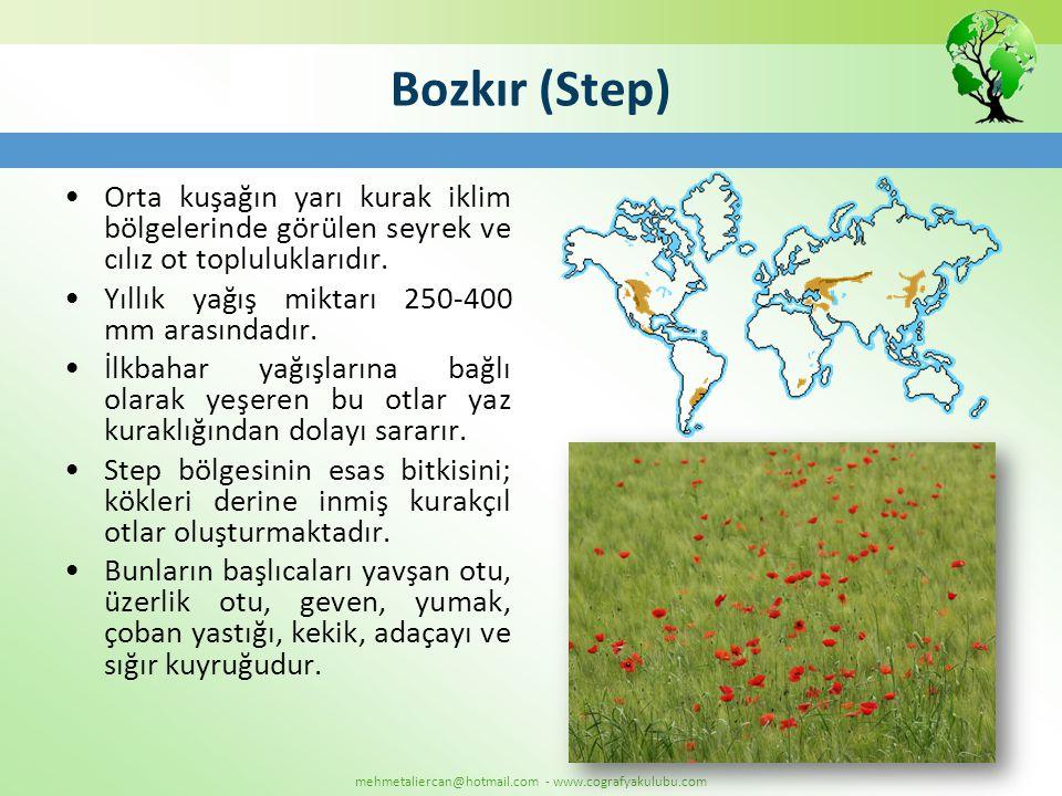 mehmetaliercan@hotmail.com - www.cografyakulubu.com Bozkır (Step) •Orta kuşağın yarı kurak iklim bölgelerinde görülen seyrek ve cılız ot topluluklarıd