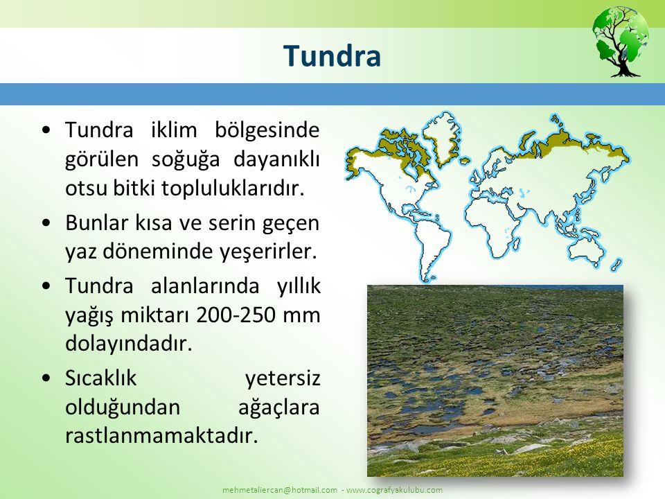 mehmetaliercan@hotmail.com - www.cografyakulubu.com Tundra •Tundra iklim bölgesinde görülen soğuğa dayanıklı otsu bitki topluluklarıdır. •Bunlar kısa